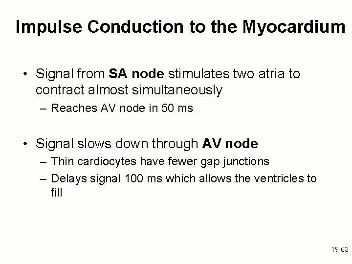 Impulse Conduction to the Myocardium • Signal from SA node stimulates two atria to