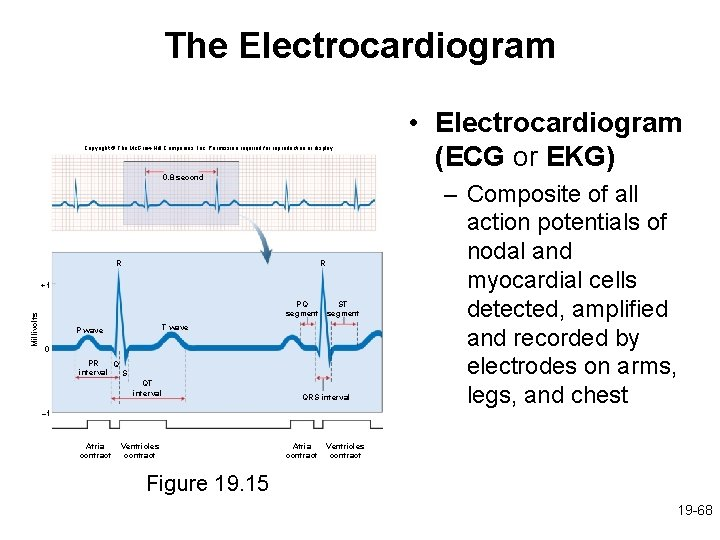 The Electrocardiogram Copyright © The Mc. Graw-Hill Companies, Inc. Permission required for reproduction or