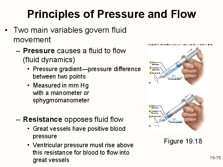 Principles of Pressure and Flow • Two main variables govern fluid movement – Pressure