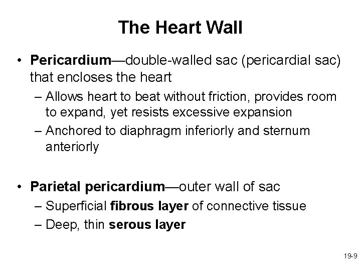 The Heart Wall • Pericardium—double-walled sac (pericardial sac) that encloses the heart – Allows