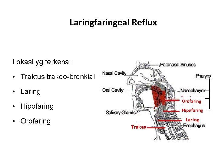 Laringfaringeal Reflux Lokasi yg terkena : • Traktus trakeo-bronkial • Laring Orofaring • Hipofaring