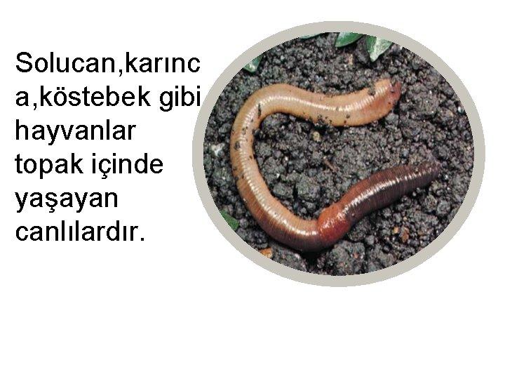 Solucan, karınc a, köstebek gibi hayvanlar topak içinde yaşayan canlılardır.