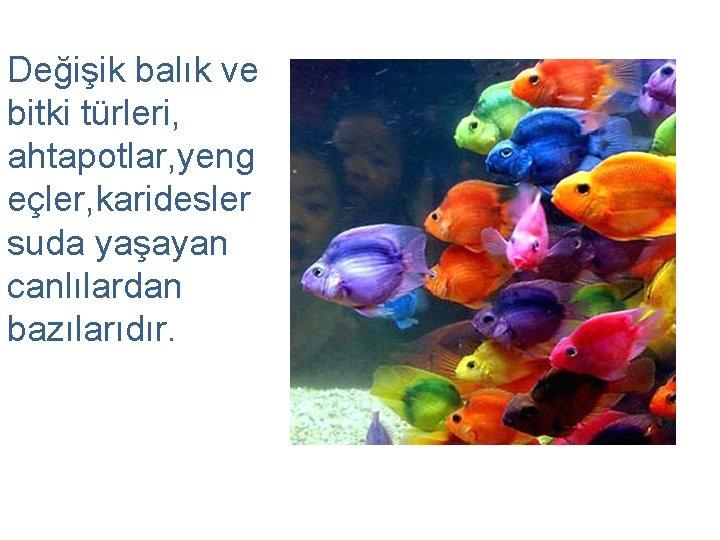 Değişik balık ve bitki türleri, ahtapotlar, yeng eçler, karidesler suda yaşayan canlılardan bazılarıdır.