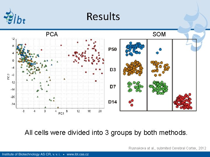 Results PCA SOM All cells were divided into 3 groups by both methods. Rusnakova