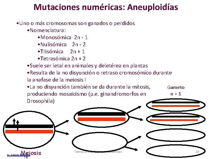 Mutaciones numéricas: Aneuploidías • Uno o más cromosomas son ganados o perdidos • Nomenclatura: