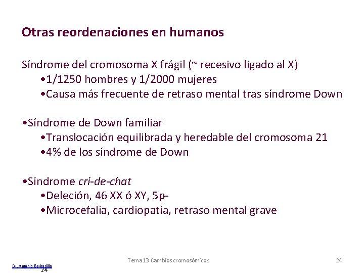 Otras reordenaciones en humanos Síndrome del cromosoma X frágil (~ recesivo ligado al X)