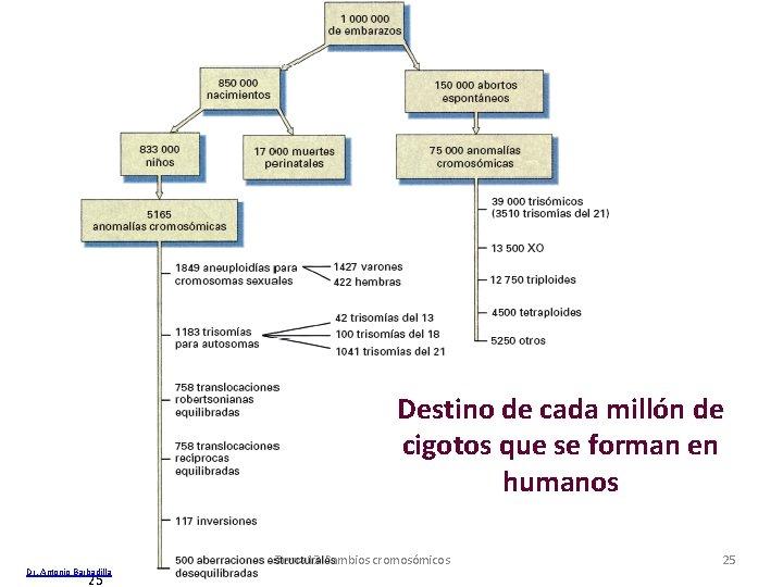 Destino de cada millón de cigotos que se forman en humanos Dr. Antonio Barbadilla