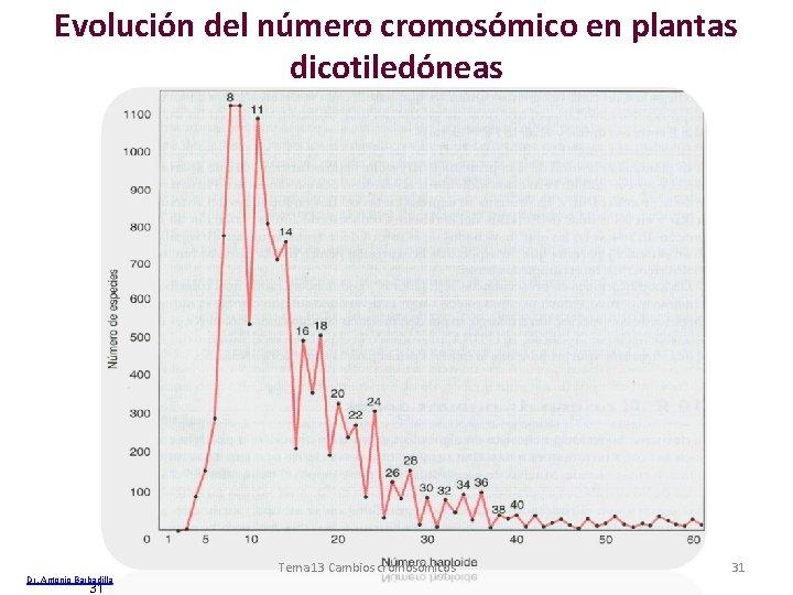 Evolución del número cromosómico en plantas dicotiledóneas Dr. Antonio Barbadilla 31 Tema 13 Cambios