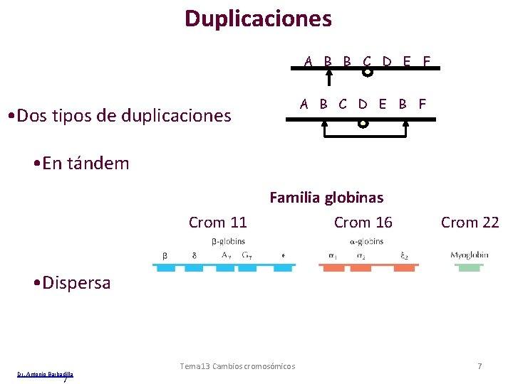 Duplicaciones A B B C D E F A B C D E B