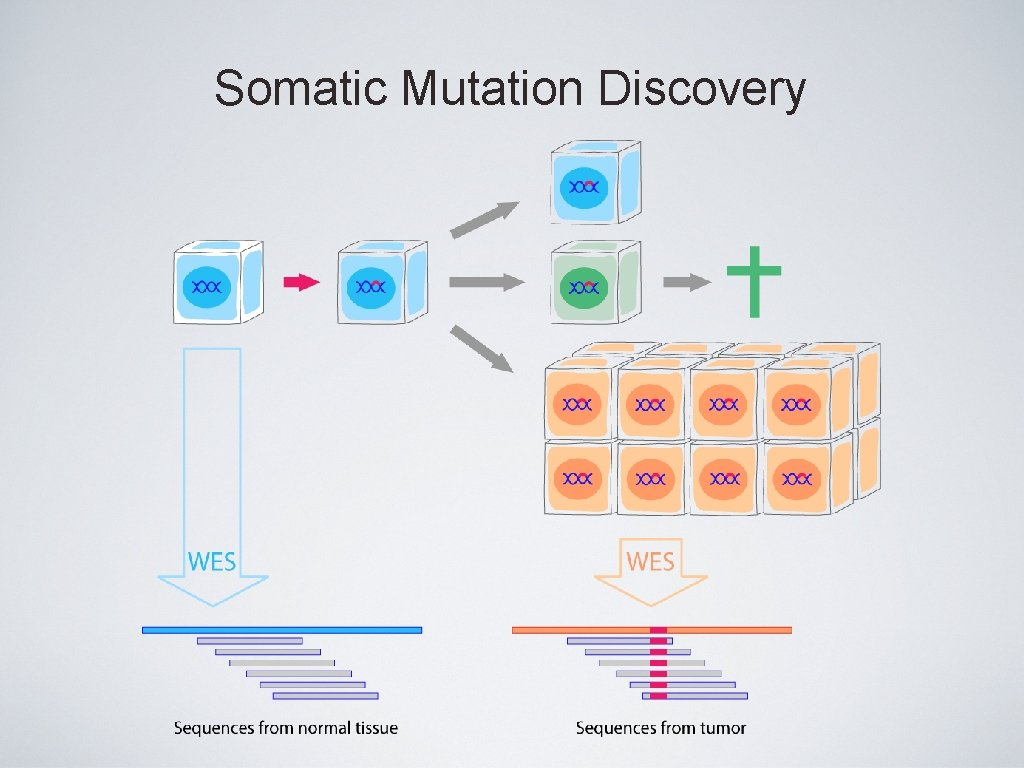 Somatic Mutation Discovery