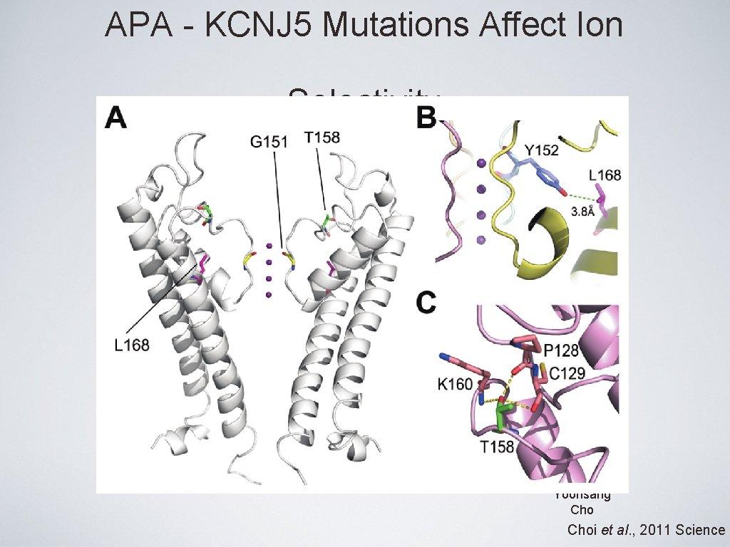 APA - KCNJ 5 Mutations Affect Ion Selectivity Yoonsang Choi et al. , 2011