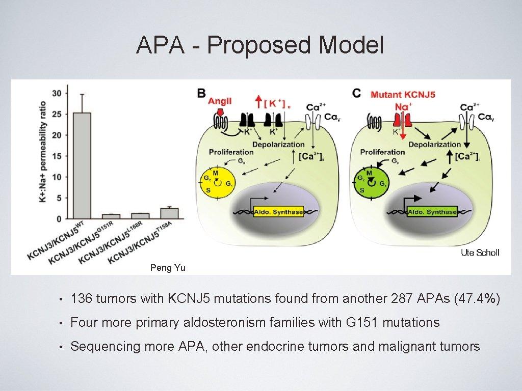 APA - Proposed Model A Peng Yu • 136 tumors with KCNJ 5 mutations