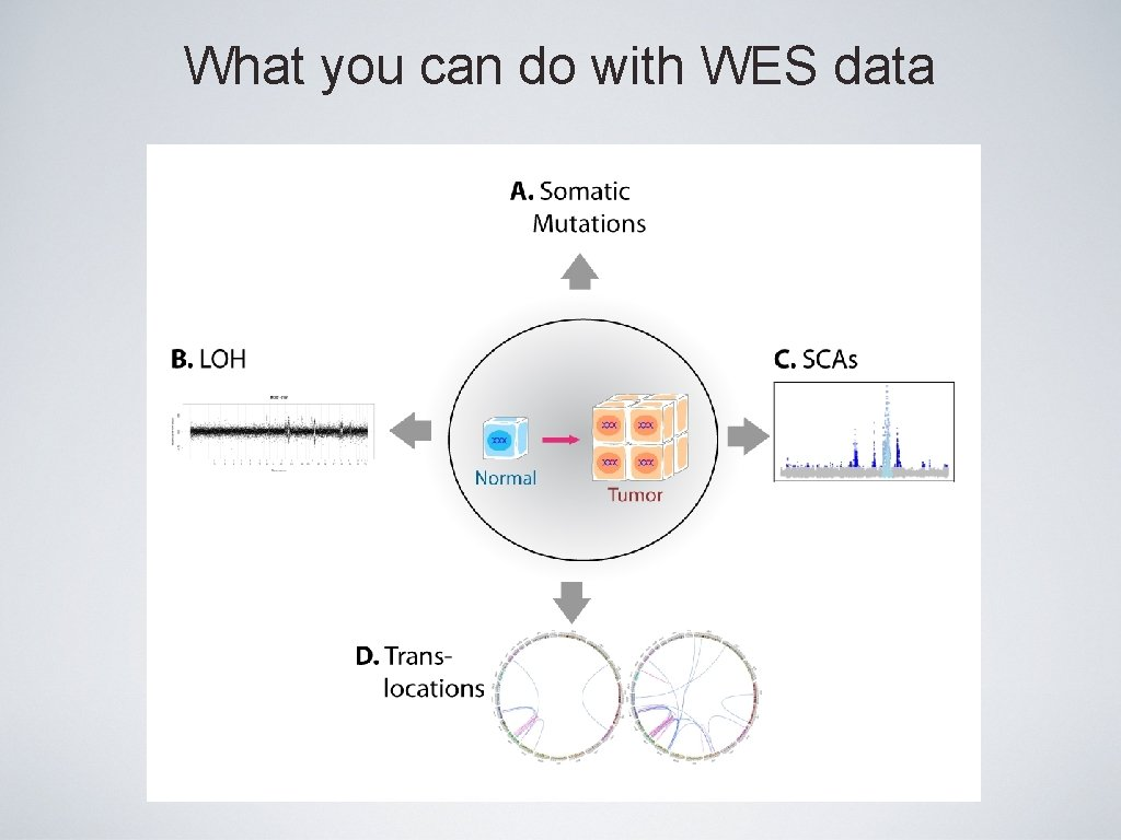 What you can do with WES data