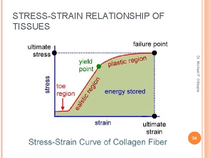 STRESS-STRAIN RELATIONSHIP OF TISSUES Dr. Michael P. Gillespie 34