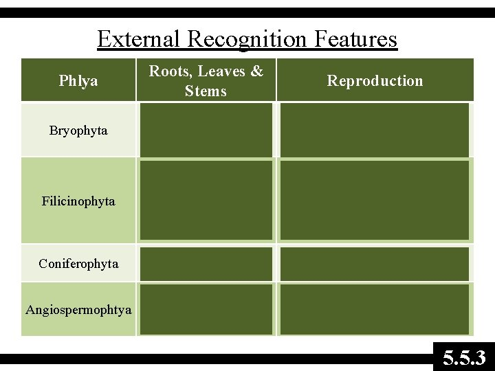 External Recognition Features Phlya Roots, Leaves & Stems Reproduction Bryophyta No roots or stem,