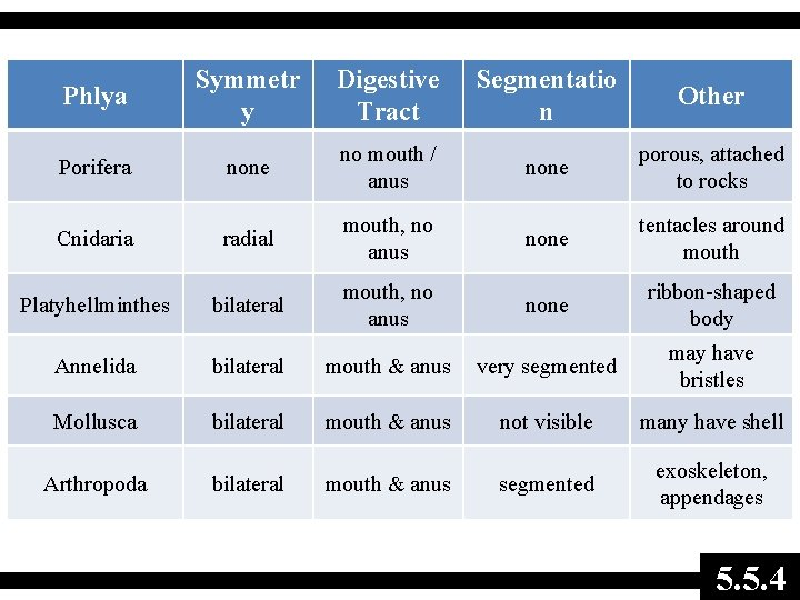 Phlya Symmetr y Digestive Tract Segmentatio n Other Porifera none no mouth / anus