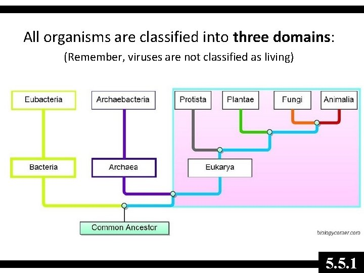All organisms are classified into three domains: (Remember, viruses are not classified as living)