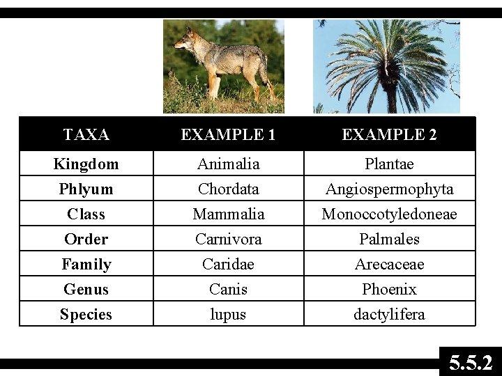 TAXA EXAMPLE 1 EXAMPLE 2 Kingdom Animalia Plantae Phlyum Class Order Family Genus Species