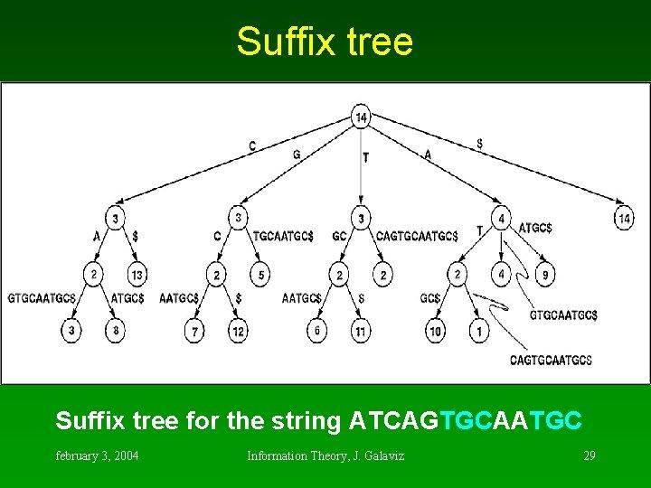 Suffix tree for the string ATCAGTGCAATGC february 3, 2004 Information Theory, J. Galaviz 29
