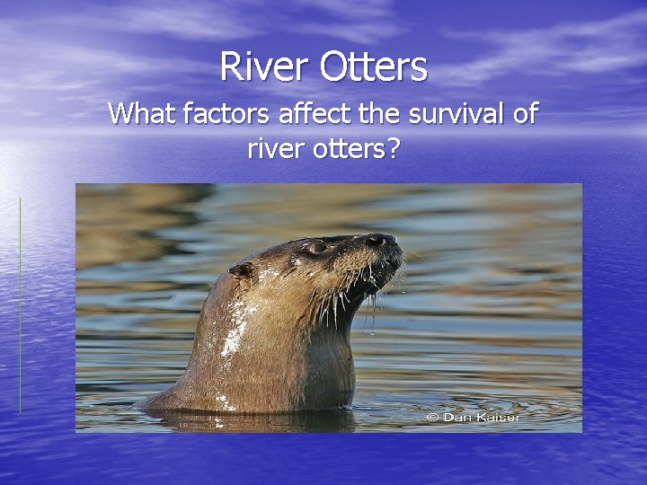 River Otters What factors affect the survival of river otters?