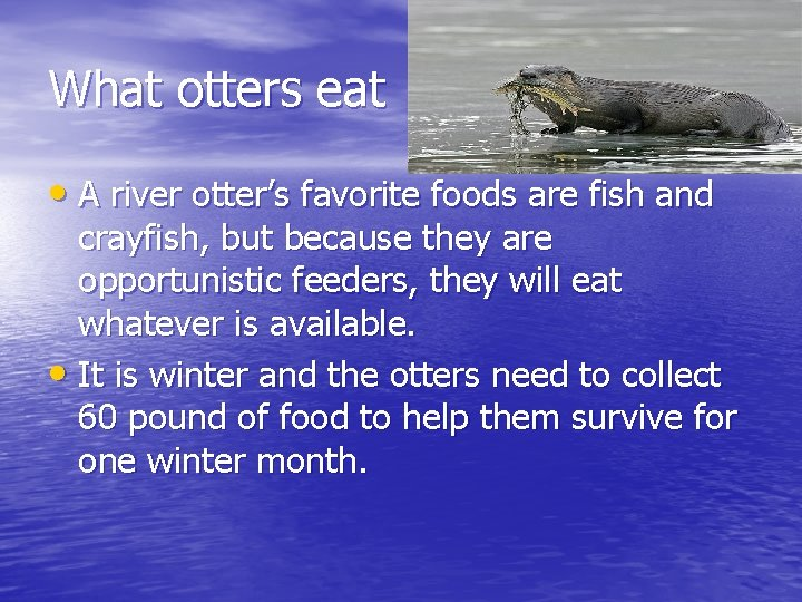 What otters eat • A river otter's favorite foods are fish and crayfish, but