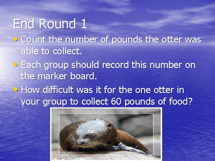 End Round 1 • Count the number of pounds the otter was able to