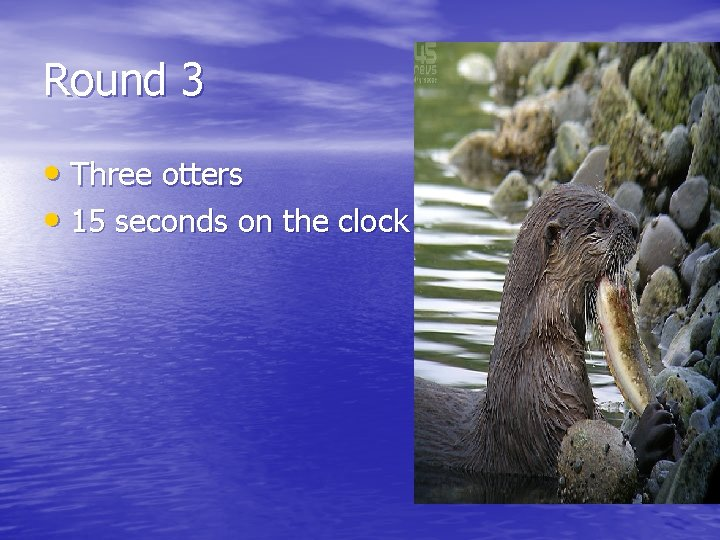 Round 3 • Three otters • 15 seconds on the clock