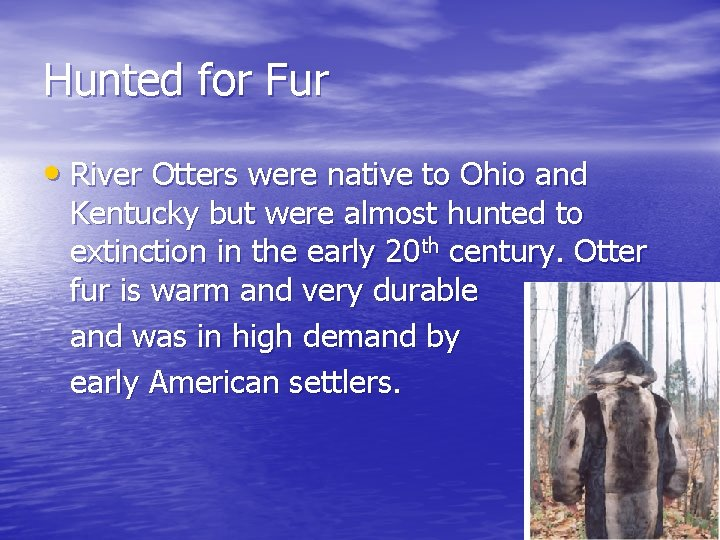 Hunted for Fur • River Otters were native to Ohio and Kentucky but were