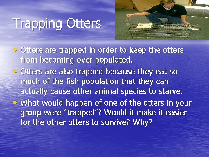 Trapping Otters • Otters are trapped in order to keep the otters • •