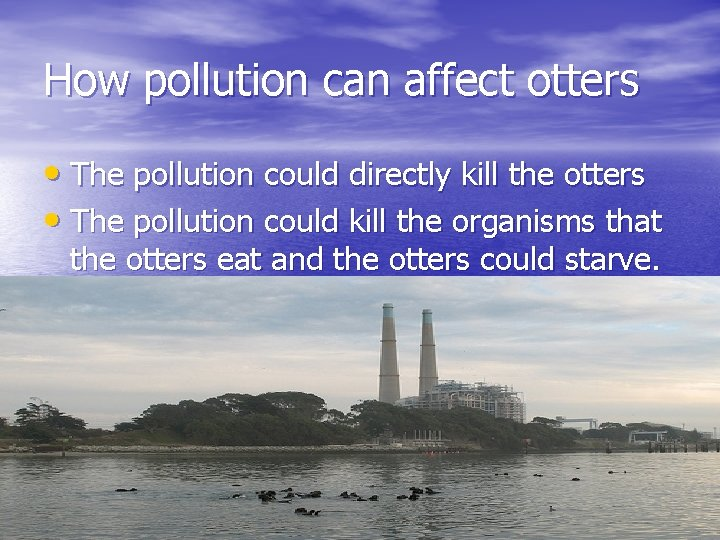 How pollution can affect otters • The pollution could directly kill the otters •