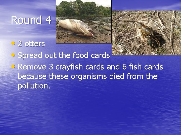 Round 4 • 2 otters • Spread out the food cards • Remove 3