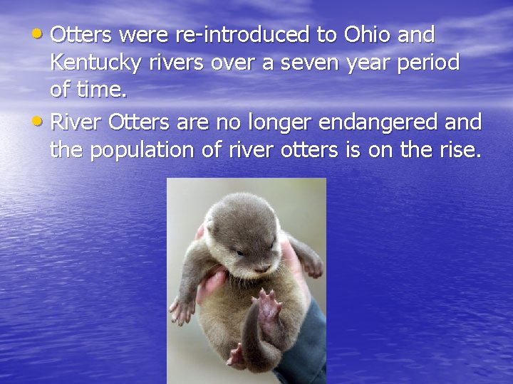 • Otters were re-introduced to Ohio and Kentucky rivers over a seven year