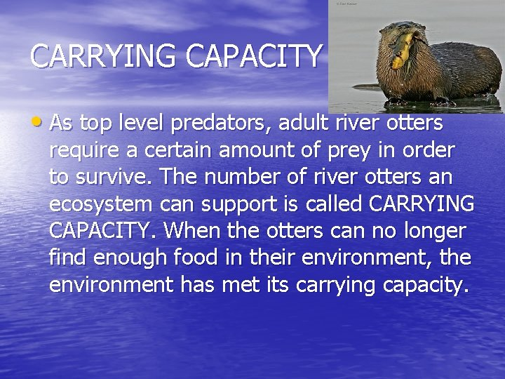 CARRYING CAPACITY • As top level predators, adult river otters require a certain amount