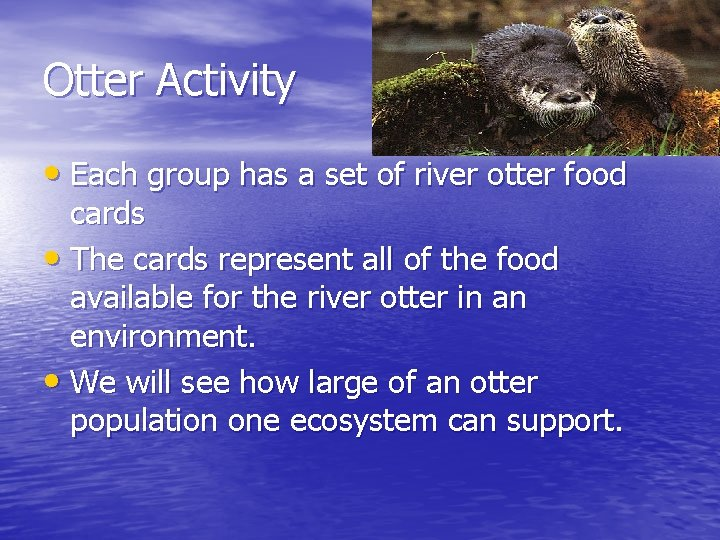 Otter Activity • Each group has a set of river otter food cards •