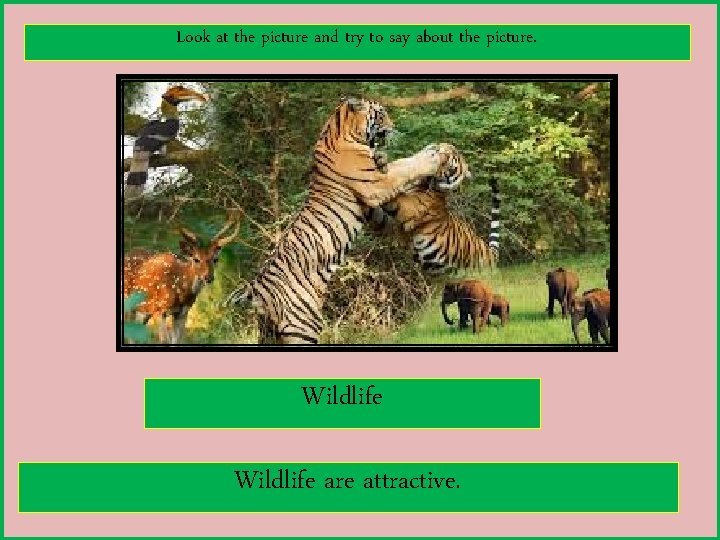 Look at the picture and try to say about the picture. Wildlife are attractive.