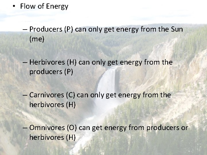 • Flow of Energy – Producers (P) can only get energy from the