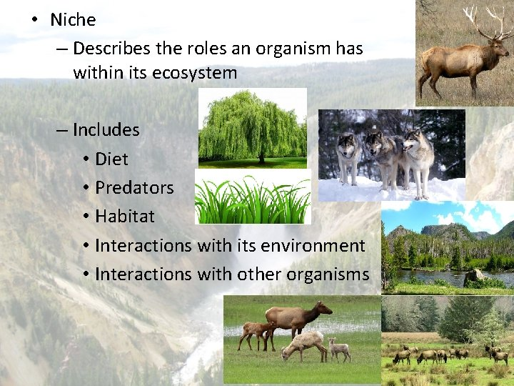 • Niche – Describes the roles an organism has within its ecosystem –