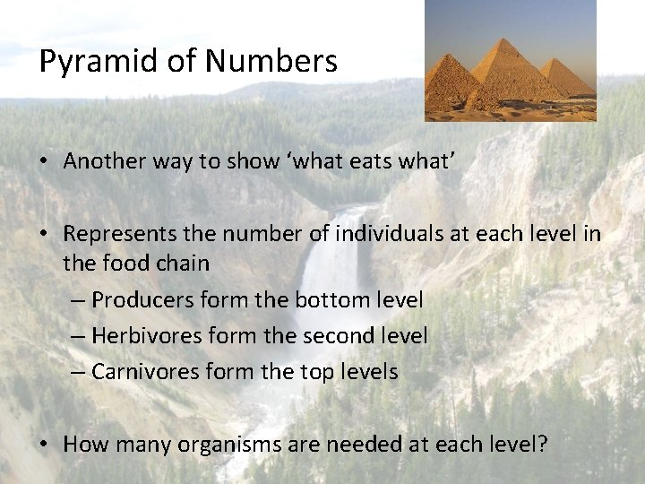 Pyramid of Numbers • Another way to show 'what eats what' • Represents the