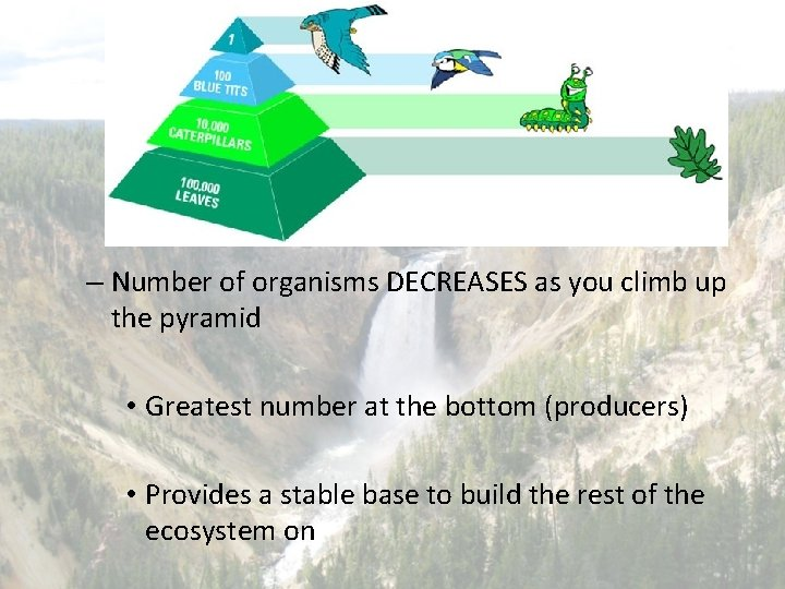 – Number of organisms DECREASES as you climb up the pyramid • Greatest number