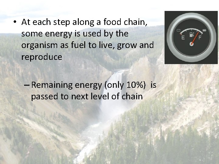 • At each step along a food chain, some energy is used by