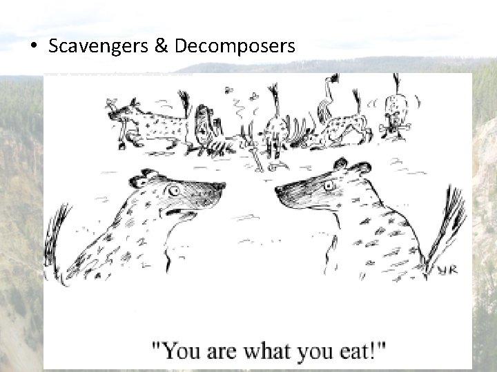 • Scavengers & Decomposers – 2 important roles • Break down dead materials