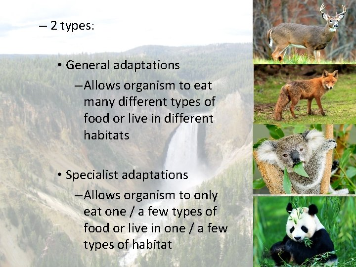 – 2 types: • General adaptations – Allows organism to eat many different types