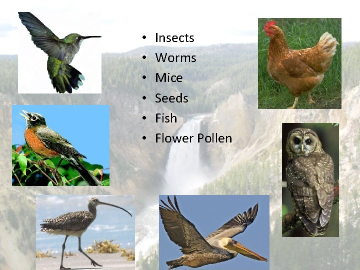 • • • Insects Worms Mice Seeds Fish Flower Pollen
