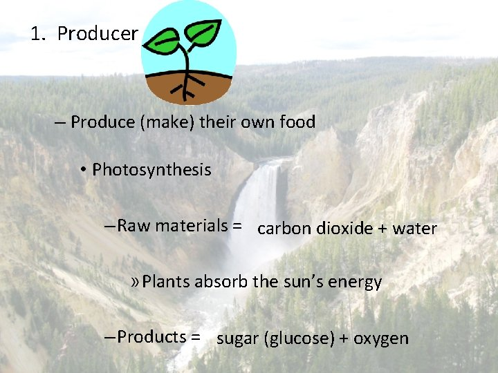 1. Producer – Produce (make) their own food • Photosynthesis – Raw materials =