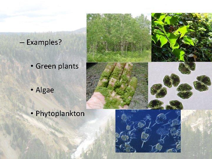 – Examples? • Green plants • Algae • Phytoplankton