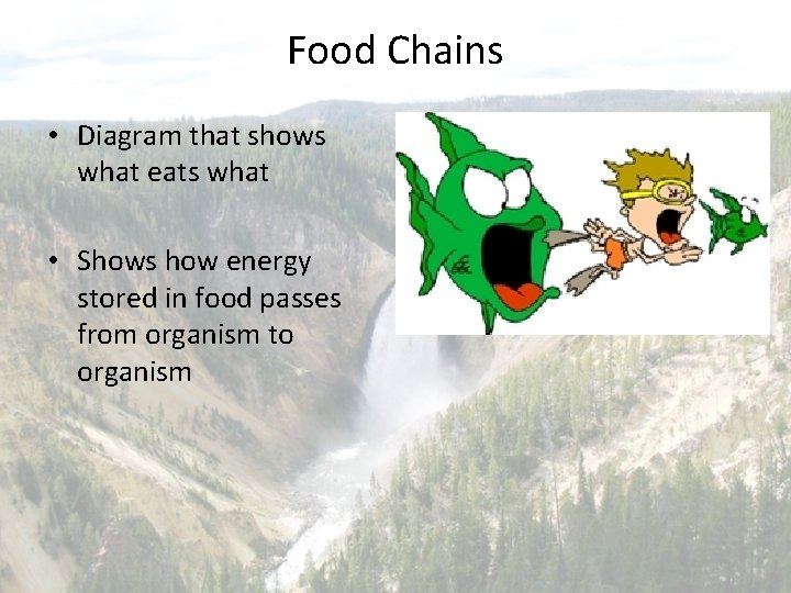 Food Chains • Diagram that shows what eats what • Shows how energy stored