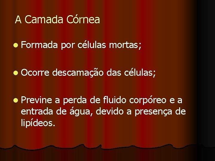 A Camada Córnea l Formada l Ocorre por células mortas; descamação das células; l