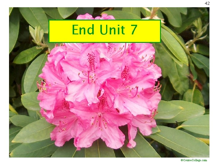 42 End Unit 7 ©Course. College. com