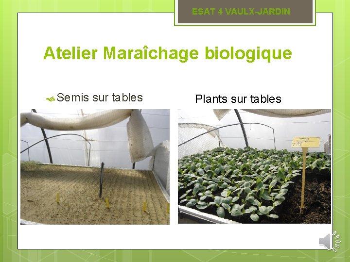 ESAT 4 VAULX-JARDIN Atelier Maraîchage biologique Semis sur tables Plants sur tables
