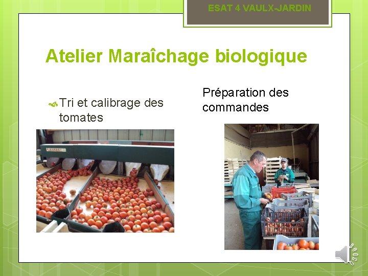 ESAT 4 VAULX-JARDIN Atelier Maraîchage biologique Tri et calibrage des tomates Préparation des commandes